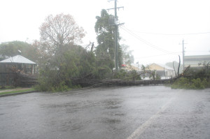 Uprooted tree in storm damage in Maleny main street