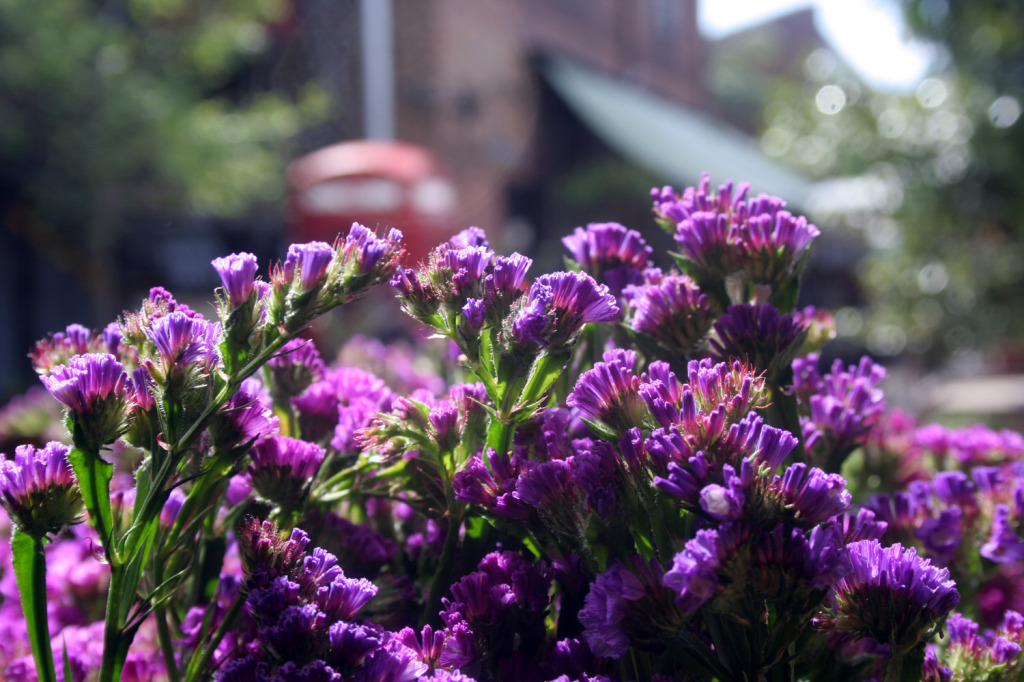 Grounds of Alexandria purple flowers eat pray workout