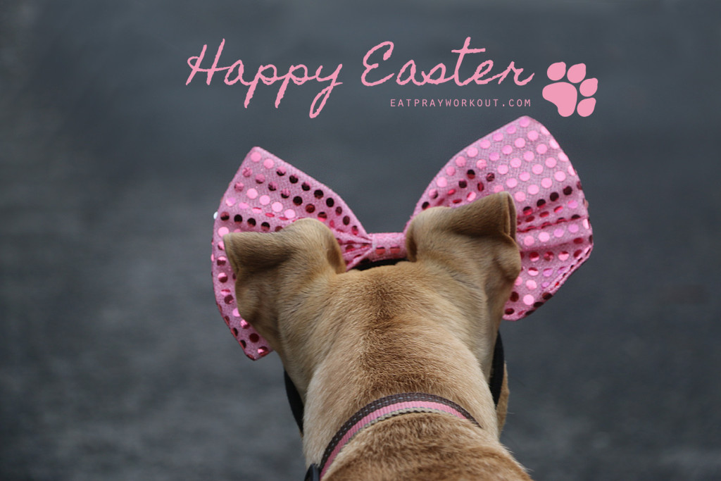 Happy Easter Boxer puppy pink bow