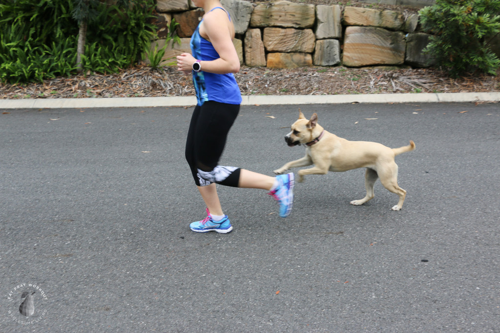 ASIC Womans Kayanos 2015 - Walk with dog