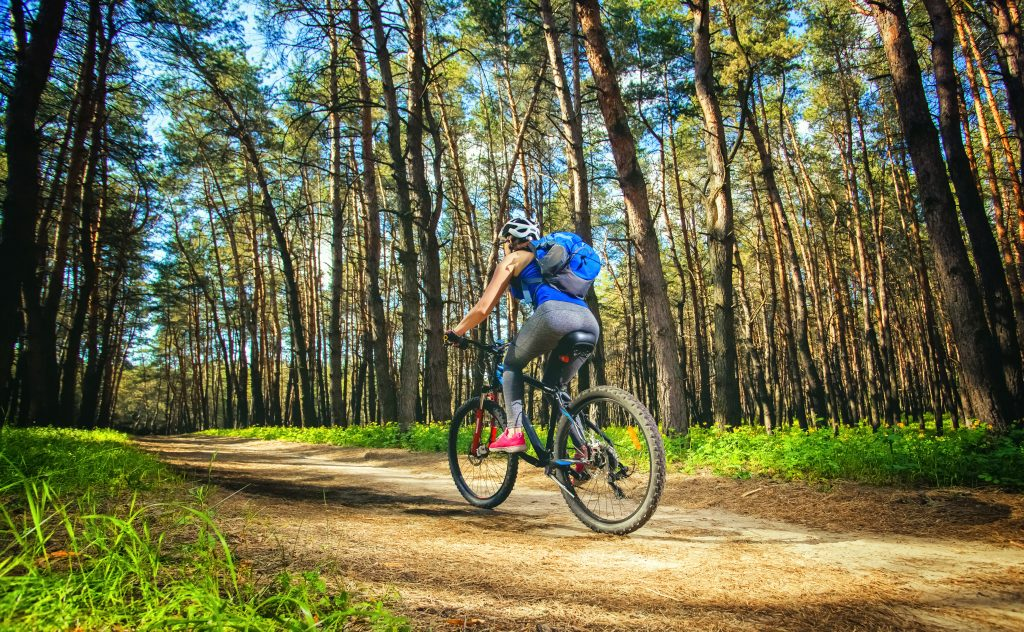 One young woman - cyclist in a helmet riding a mountain bike outside the city, on the road in a pine forest on a summer day in Canberra