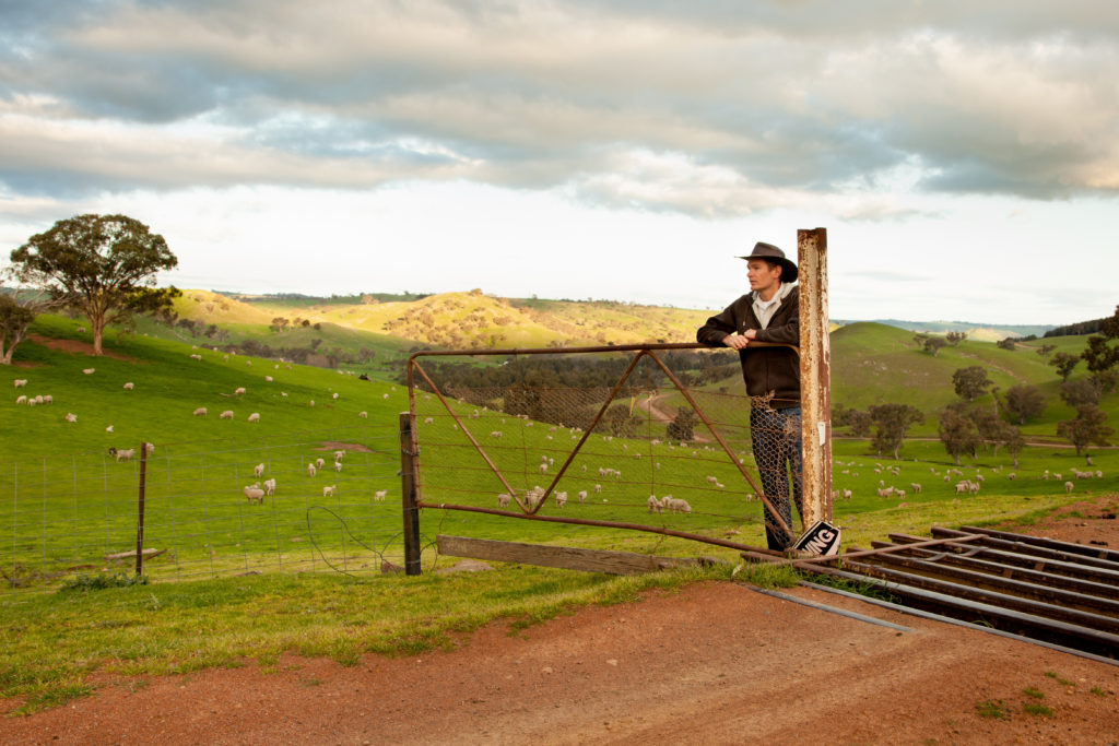 Aussie farmer looking out over a sheep paddock considering switching to farming organic in australia. Should I switch to buying organic food in Australia? An interview with Andrew Monk Australian Certified Organics Chairman